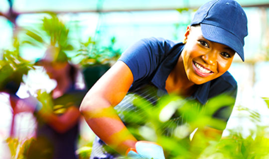 woman working in greenhouse - thumbnail
